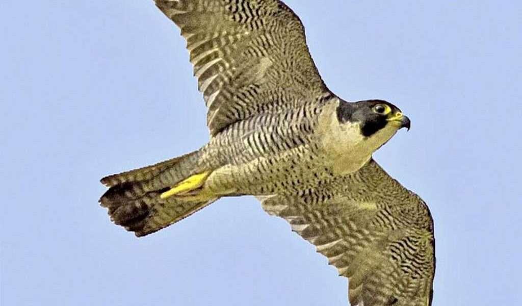 Preocupación por la caza de aves en Cundinamarca