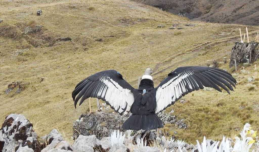 https://www.parquesnacionales.gov.co/portal/es/en-busca-del-condor-de-los-andes/