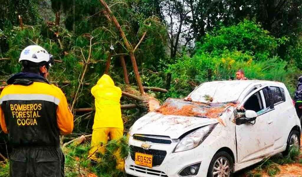 Un árbol cayó sobre un vehículo en Cogua